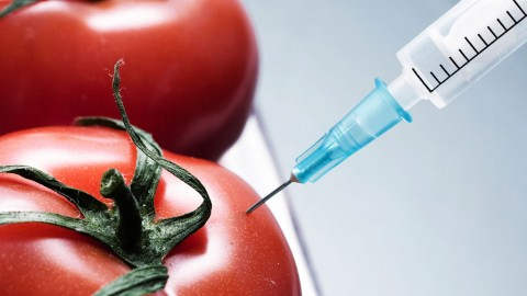 Genetically modified organisms: A basic information guide