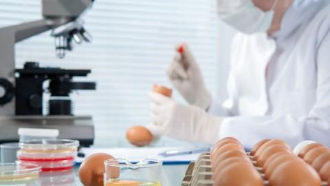 Γενετικά τροποποιημένα τρόφιμα, οδηγός βασικών πληροφοριών